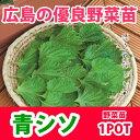 野菜苗 シソ オオバ 苗 販売 1POT【予約苗】【納期指定不可】