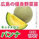 野菜苗 マスクメロン パンナ 実生苗 1POT【予約苗】【納期指定不可】