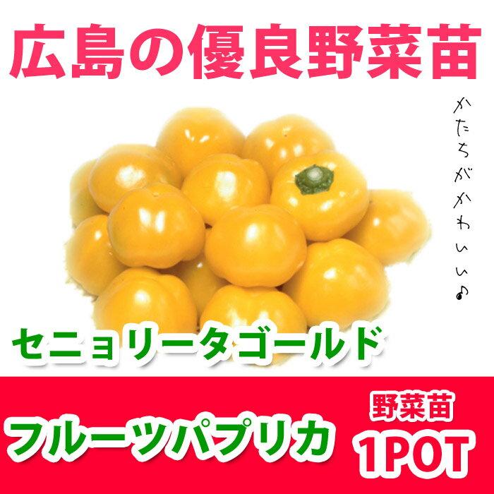 フルーツパプリカ セニョリータゴールド(苗)