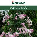 バラ苗】 京成バラ園 メイアン ツル ミミエデン 大苗 7号鉢 ピンク系 CL