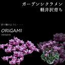 【花苗】 軽井沢育ち ガーデンシクラメン オリガミ