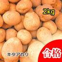 【春植え予約ジャガイモ】【種芋】ジャガイモ じゃがいもの種 2kg【キタアカリ】【北あかり】【検査合格済】【サイズ混合】【2017年入荷済み発送中】