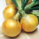 【予約苗】玉ねぎ タマネギ苗 早生種 エスエス苗 2レーン約80本