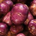 タワラムラサキ 種芋 ジャガイモ じゃがいもの種 1kg【俵屋】【検査合格済】【サイズ混合】【春植えジャガイモ】