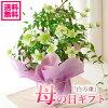 鉢花のイメージ