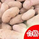 【春植え予約ジャガイモ】【種芋】ジャガイモ じゃがいもの種 1kg【ノーザンルビー】【検査合格済】【サイズ混合】【02P10Jan15】【HLS_DU】
