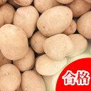【春植え予約ジャガイモ】【種芋】ジャガイモ じゃがいもの種 1kg【インカのめざめ】【検査合格済】【