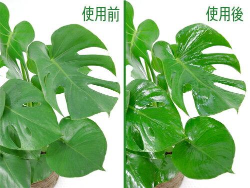 リーフクリン(葉面洗浄剤)汚れを落とし、葉に自...の紹介画像2