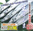 【ご予約受付中】三陸産 旬の獲れたて生秋刀魚たっぷり20尾/刺身もOK!鮮度抜群/獲れ