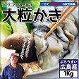新物入荷!!【送料無料】【クニヒロ水産】広島産冷凍牡蠣(カキ)たっぷり1kg(冷凍便)[メール便:不可]