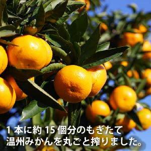 【名入れ酒】みかん酒 500ml 【あす楽】の紹介画像2