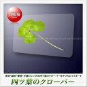 【高山園芸】四つ葉のクローバー ラミネートカード
