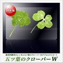【高山園芸】五つ葉のクローバー ダブル ラミネートカード