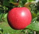 【10月中旬収穫】北紅家庭用キズあり5kg