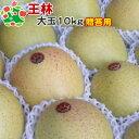【11月上旬収穫】ふっくら甘ぁ〜い♪青リンゴの代表格『見た目も素晴らしくギフトに最適!特選大玉』★王林大玉10キロ【楽ギフ_のし】