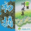 2018年 静岡 川根産 茶葉 100% 「初摘」100gx3個 合計300g 川根茶 煎茶 緑茶 静岡茶 日本茶