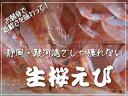 静岡駿河湾の新鮮な生桜えび250g