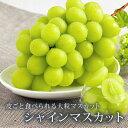 シャインマスカット 【山形県 産地直送 ぶどう 人気の種なしブドウ】