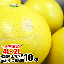 4L〜2Lサイズ約<strong>10kg</strong>文旦!【<strong>送料無料</strong>】 高知産 土佐文旦の訳あり ご家庭用 ぶんたん2月上旬頃発送予定沖縄本土と北海道は別途送料 全国の離島は発送不可