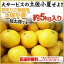 小夏!【送料無料】ご家庭用♪高知産:土佐小夏:約5kg♪ 日向夏・ニューサマーオレンジ
