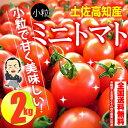 【送料無料】 プチトマト約2kg高知のミニトマト沖縄県と離島は配送不可!北海道へお届けの商品は1個あ