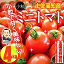 【送料無料】 プチトマト約4kg高知のミニトマト沖縄県と北海道と離島は、別途1000円配送料がかかります。