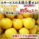 美味しい小夏!【送料無料】 ご家庭用♪高知産:土佐小夏:約5kg♪ 日向夏・ニューサマーオレンジ!沖