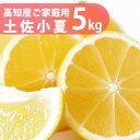 小夏!【送料無料】ご家庭用♪高知産 土佐小夏 約5kg 日向夏 ニューサマーオレンジ4月