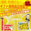 小夏:約2.5kg♪ ギフト用秀品日向夏・ニューサマーオレンジ!高知産沖縄県と離島は、別途1000円配送料がかかります。セール