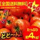 【送料無料】 桃太郎トマトたっぷり約4kg【売れてます】産直龍馬くん高知〜愛媛産:とまと沖…