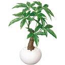 家具 インテリア 空気もキレイにする癒しのグリーン