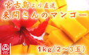 (3102)蔵≪今年も感動してください!1年間愛情を込めて育てた来間孝勇さんのマンゴー