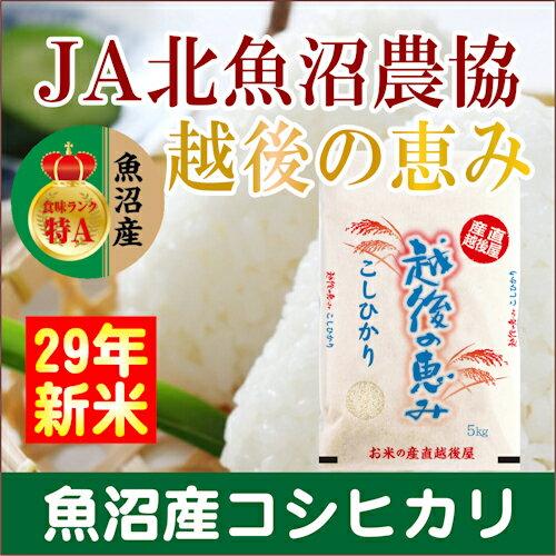 【29年 コシヒカリ 魚沼産 送料無料】新潟県 ...の商品画像