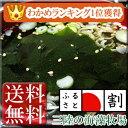 San_wakame_300_0031