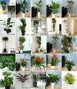 おまかせ観葉植物8000