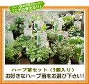 ハーブの苗物販売 「10.5cmポット」ハーブ苗 【5個セット】ハーブポットセットレビュー6件