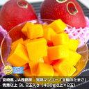 宮崎県 JA西都産 完熟マンゴー「太陽のタマゴ」青秀以上 3L 2玉入り (450g以上×2玉)※クール便