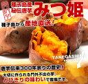 鹿児島県 種子島から産地直送 究極の安納紅 「みつ姫」 1.8キロ さつまいも 唐芋