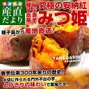 鹿児島県より産地直送 種子島安納紅「みつ姫」 約1.8キロ さつまいも 唐芋 からいも カライモ