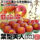 送料無料 青森県より産地直送 JAつがる弘前 プレミアムサンふじ 葉型美人(はかたびじん) 約3キロ(12玉から13玉) 林檎 りんご リンゴ