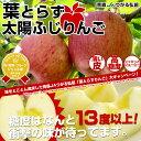 青森JAつがる弘前 糖度13度「葉とらず太陽ふじりんご」3kg(9玉〜13玉) 産地直送品【楽ギフ_のし】