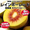 福岡 JAふくおか八女 キウイ「レインボーレッド」15玉 約1.35キロ