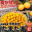 送料無料 宮崎県から産地直送 JA宮崎中央 たまたま 2Lサイズ 3キロ(約120粒)きんかん 金柑