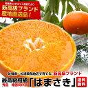 送料無料 佐賀県より産地直送 JAからつ はまさき 秀品 2.5キロ箱(12から18玉)
