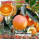 タロッコオレンジ ブラッド オレンジ