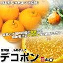 送料無料 熊本県から産地直送 JAあまくさ 露地デコポン 2Lから3L 5キロ(18から20玉)