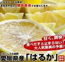 送料無料 愛媛県より産地直送 JAにしうわ はるか LからMサイズ 5キロ(30から34玉)