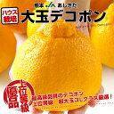 熊本県より産地直送 JAあしきた ハウス栽培 大玉デコポン (優品) 3キロ(7玉〜8玉)