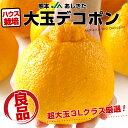 熊本県より産地直送 JAあしきた ハウス栽培 大玉デコポン (良品) 3キロ(7玉〜8玉)