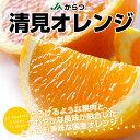 送料無料 佐賀県より産地直送 JAからつ 清見オレンジ MからSサイズ 5キロ(25から35玉)